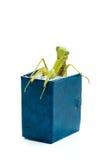 Зеленый mantis на старой книге, конец вверх, селективный фокус Mantodea Стоковое Изображение
