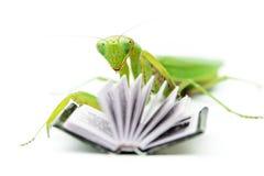 Зеленый mantis на старой книге, конец вверх, селективный фокус Mantodea Стоковое Фото
