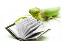 Зеленый mantis на старой книге, конец вверх, селективный фокус Mantodea Стоковые Изображения