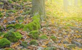 Зеленый mos Стоковая Фотография