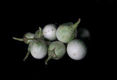 Зеленый Solanum Стоковые Изображения RF