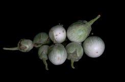 Зеленый Solanum Стоковая Фотография