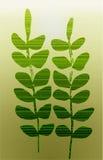 2 зеленых ветви на светлой предпосылке Стоковое Изображение