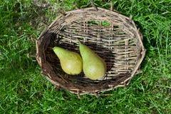 2 зеленых груши в старой корзине Стоковые Фотографии RF