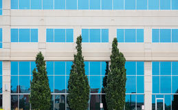 3 зеленых дерева голубым Windows Стоковое фото RF