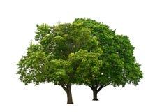 Зеленые деревья Стоковое фото RF