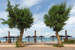 2 зеленых дерева на пляже Стоковая Фотография RF