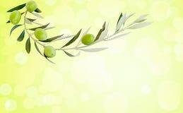 5 зеленых зрелых оливок на ветви Стоковое Изображение