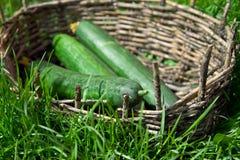 3 зеленых длинных огурца в старой корзине Стоковое Изображение RF