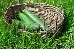 3 зеленых длинных огурца в старой корзине Стоковые Фотографии RF
