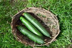 3 зеленых длинных огурца в старой корзине Стоковое Фото