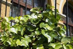 10 зеленых листьев Стоковое Фото