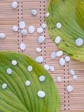 2 зеленых листь и малых белых камни на бамбуковой циновке Стоковая Фотография