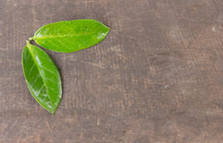 2 зеленых листь на таблице, деревянная предпосылка Стоковые Изображения