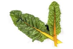 2 зеленых листь швейцарского мангольда с желтым стержнем Стоковое фото RF