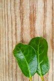 2 зеленых листь Стоковое фото RF