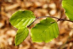 4 зеленых листь Стоковые Фото