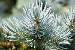 3 зеленых листь Стоковые Фотографии RF