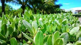 2 зеленых листь Стоковое Фото