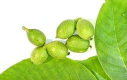 6 зеленых молодых грецких орехов в шелухах с leavs грецких орехов на белом bac Стоковая Фотография RF