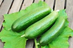 3 зеленых огурца на лист Стоковая Фотография RF