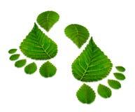 2 зеленых следа ноги изолированного на белизне Стоковое Фото