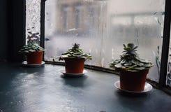 3 зеленых цветка на windowsill окном Стоковая Фотография RF