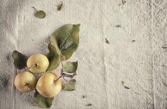 3 зеленых яблока на белой ткани Стоковые Изображения RF