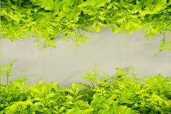 зелень gentile предпосылки абстракции Стоковое фото RF