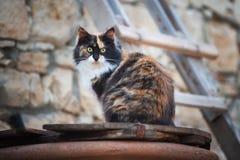 Зелен-наблюданный кот Стоковые Изображения