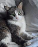 Зелен-наблюданный кот Стоковые Фотографии RF