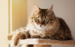 Зелен-eyed кот стоковое фото