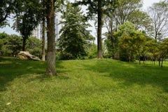 Зелёная лужайка и деревья в современном summy городе Стоковые Изображения RF