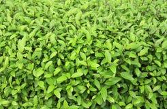 зелёный завод в саде Стоковые Фото