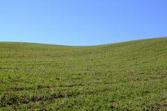 Зелёный Стоковое Изображение