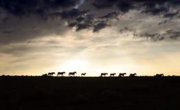 зига лошади Стоковые Изображения