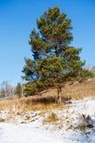 Зима ландшафта, дерево Стоковое Изображение RF