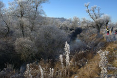 Зима ландшафта, который замерли деревья Стоковые Фото
