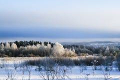 зима ландшафта панорамная зима замерли пущей, котор Стоковые Изображения RF