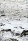 зима 8 ландшафтов Стоковая Фотография