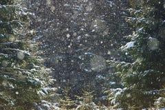 зима атмосферы Стоковые Фото