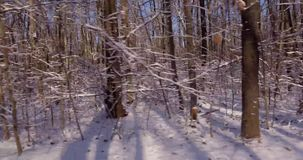 зима белизны прогулки фото черной пущи сток-видео