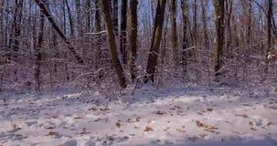 зима белизны прогулки фото черной пущи видеоматериал