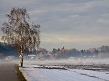 зима березы Стоковые Изображения RF