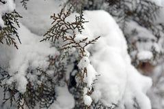 зима белизны снежинок предпосылки голубая Стоковое Изображение
