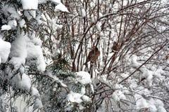 зима белизны снежинок предпосылки голубая Стоковые Изображения