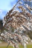зима близкой feathery травы высокорослая поднимающая вверх стоковые изображения rf