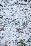 Зима болгарина картин Стоковое Изображение RF