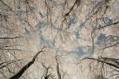 зима бука замерли пущей, котор Стоковое Фото