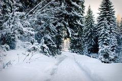 зима вала пущи ели Стоковое Фото